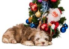 Декоративная собачка покрашенная русским Стоковые Изображения