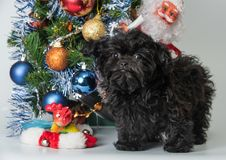 Декоративная собачка покрашенная русским Стоковое Изображение RF