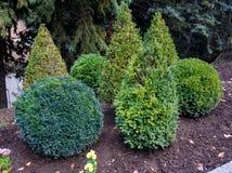 Декоративная стрижка кустарников в форме геометрических форм Стоковые Фотографии RF