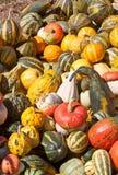 декоративная тыква стоковое изображение