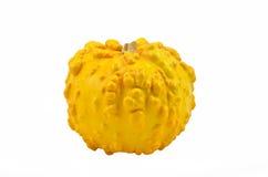 декоративная тыква Стоковое фото RF