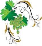 декоративное виноградное вино иллюстрация штока
