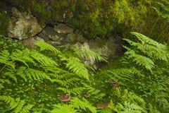 Декоративное влияние природы Стоковые Фотографии RF