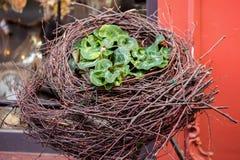 Декоративное гнездо от хворостин и свежих цветков около окон старого красного дома Концепция начала весны, пасхи Стоковые Фотографии RF