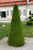 Декоративное дерево в саде Стоковые Фотографии RF