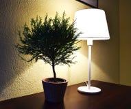 Декоративное малое дерево около настольной лампы Стоковое Изображение RF
