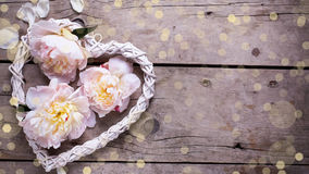 Декоративное сердце и розовые пионы цветут на постаретом деревянном backgr Стоковая Фотография RF