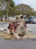 Декоративно украшенный верблюд с посетителями одеяла отдыхая лежа ждать стоковые фотографии rf