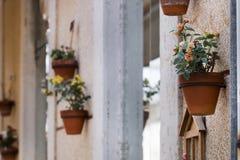Декоративные вазы цветка на улице Стоковые Фото