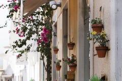 Декоративные вазы цветка на улице Стоковые Изображения