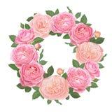 Декоративные винтажные розовые розы и бутон с листьями в округлой форме Стоковое Фото
