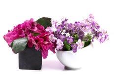 Декоративные заводы цветка Стоковая Фотография RF