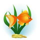 Декоративные золотые рыбы Стоковая Фотография