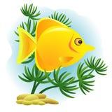 Декоративные золотые рыбы Стоковые Изображения