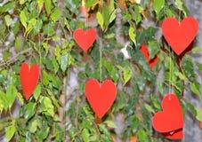 Декоративные красные сердца вися в листьях зеленого растения Стоковые Фотографии RF