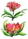 Декоративные красные тропические цветки в цветении Стоковые Изображения