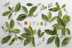 Декоративные письма формируя ` природы ` слова стоковое изображение