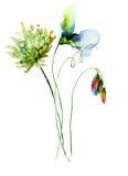 Декоративные полевые цветки Стоковые Изображения