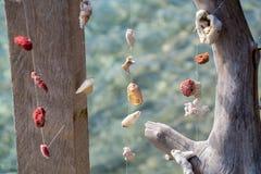 Декоративные раковины, селективный фокус Стоковые Фото