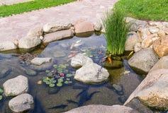 Декоративные рыбы в пруде Стоковые Фотографии RF
