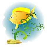 Декоративные рыбы Стоковые Изображения RF