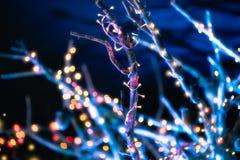 Декоративные света праздника Приём гостей в саду стоковое фото rf