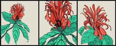 Декоративные тропические цветки - кардинальный предохранитель Стоковые Фотографии RF
