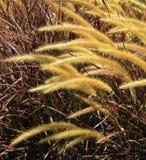Декоративные уши золота Стоковое Изображение RF