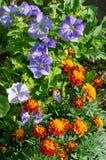 Декоративные цветки сада на flowerbed стоковые фотографии rf