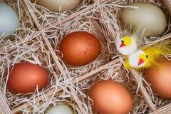 Декоративные цыплята пасхи с яичками в клети Стоковое Изображение