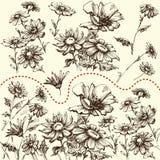 декоративные элементы флористические много установили Собрание цветков руки вычерченных бесплатная иллюстрация