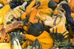 декоративные gourds Стоковое фото RF