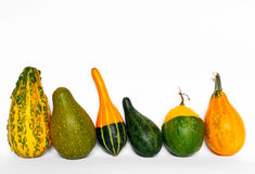 Декоративные gourds Стоковое Изображение RF