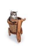 декоративный бак котенка цветка Стоковые Изображения
