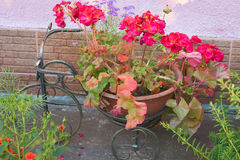 Декоративный велосипед с гераниумом Стоковые Изображения RF