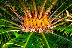 Декоративный детальный центр зеленой пальмы любит пламена стоковое фото