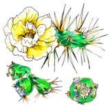 Декоративный желтый кактус в цветении Стоковые Изображения