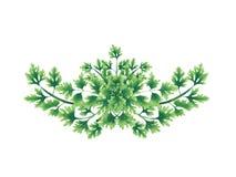 Декоративный зеленый букет листьев петрушки Стоковое Изображение