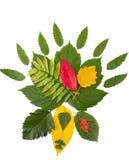 Декоративный комплект различных листьев осени Стоковые Изображения RF