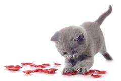 декоративный котенок сердец Стоковая Фотография RF