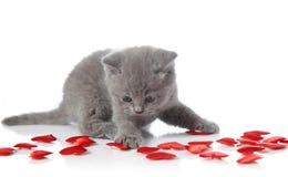 декоративный котенок сердец Стоковое Фото