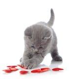 декоративный котенок сердец Стоковые Фото