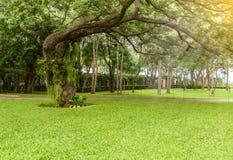 Декоративный сад имеет большие деревья Стоковые Фотографии RF