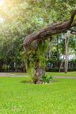 Декоративный сад имеет большие деревья Стоковое Изображение
