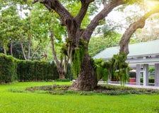 Декоративный сад имеет большие деревья Стоковая Фотография