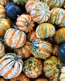 Декоративный сезон тыквы Стоковая Фотография RF