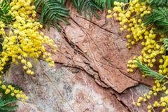 Декоративный состав от мимозы на каменном backgrou Стоковое Изображение