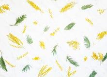 Декоративный состав цветков и листьев dealbata акации Стоковые Изображения RF