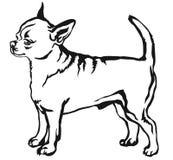Декоративный стоящий портрет vecto чихуахуа краткости собаки с волосами Стоковые Изображения