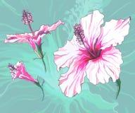 Декоративный цветок гибискуса Стоковые Фото